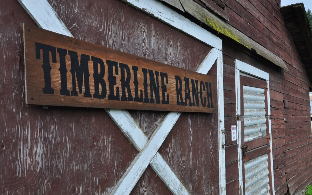 Timberline 2014